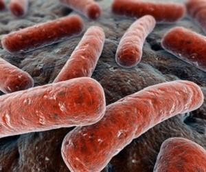 бактерии вызывающие неприятный запах изо рта