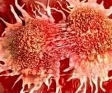 рак вылечат заставив клетки делиться быстрее