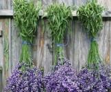 природные антидепрессанты успокоительные травы