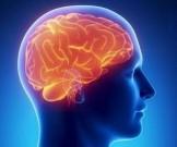 Простые упражнения для улучшения кровоснабжения мозга