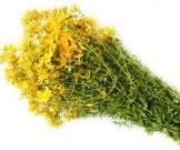 фитотерапия простатите общедоступных эффективных лекарственных трав