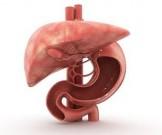 жировой болезни печени виноват особый белок