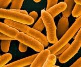 ученые выяснили причину устойчивости бактерий высокой температуре