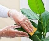 топ-10 смертельно опасных здоровья комнатных растений