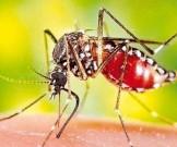 отдых малярии
