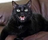 исследователи домашние кошки накопители опасных химикатов