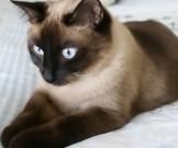 самый лучший домашний лекарь кошка