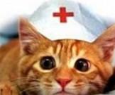 домашние животные улучшают здоровье хозяев