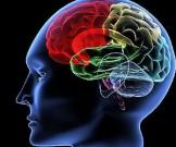 известно происходит мозгом время старения