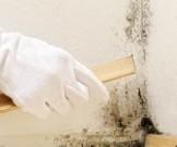 помещениях плесенью возрастает заболеваемость астмой