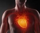 лекарственных трав очищения сосудов нормализации давления улучшения сердечного