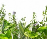 очищение печени токсинов лекарственными травами