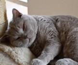 животные помогают справиться унынием стрессом