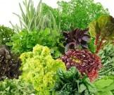 зелень основа рациона здорового человека