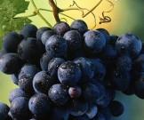 ягоды овощи фрукты здоровых суставов