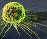 раскрыта связь старостью раком воспалениями