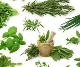 зеленый чай ореховая скорлупа кора дуба заболеваниях зубов