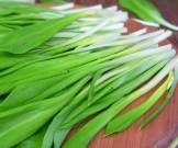 сезонный продукт полезные свойства черемши