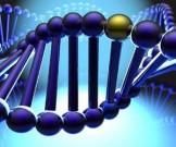 обнаружена сеть 320 генов отвечающих возникновение эпилепсии